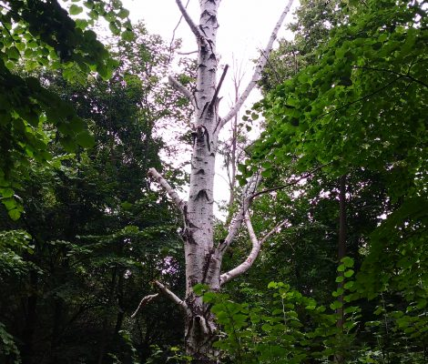 brezata